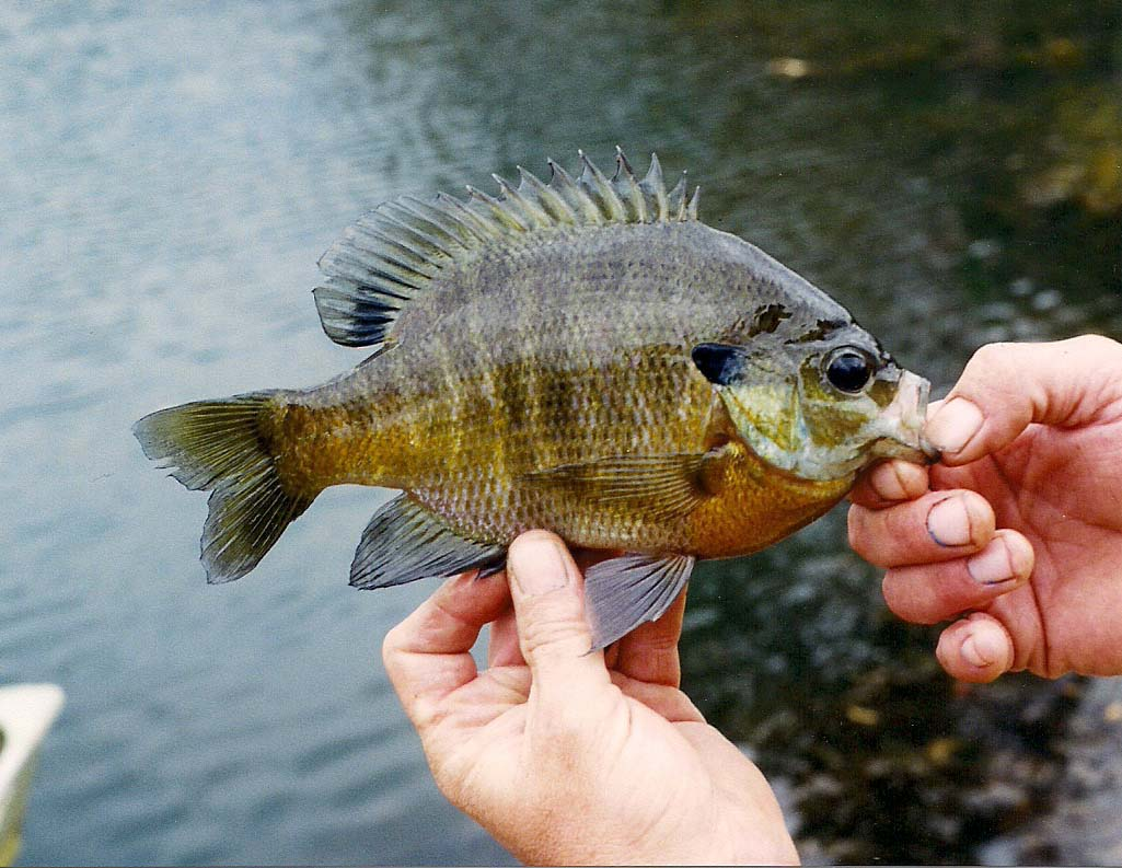 301 moved permanently for Missouri fishing license age