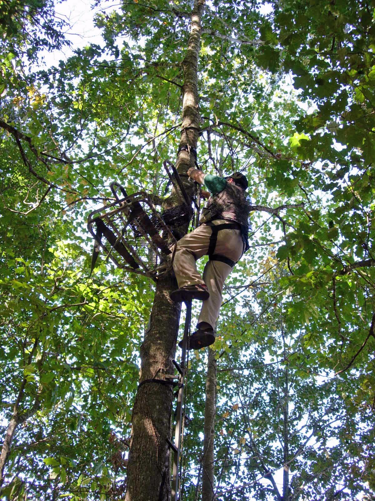 Tree Stand Regulations Treestand