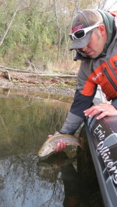 Eric releases a nice Taneycomo Brown Trout into the icy waters.
